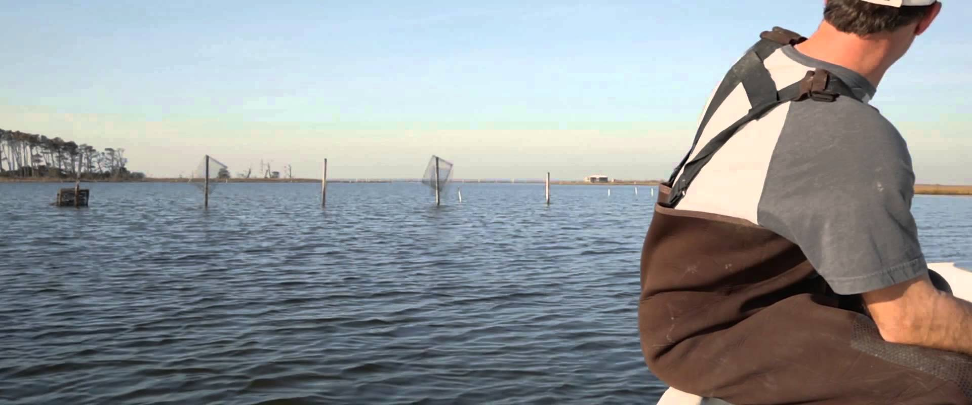 Chincoteague Shellfish Farms A Partnership For Sustainable Seafood Part 2