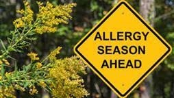Reduce Allergy Symptoms With Giant Pharmacist Approved Tips